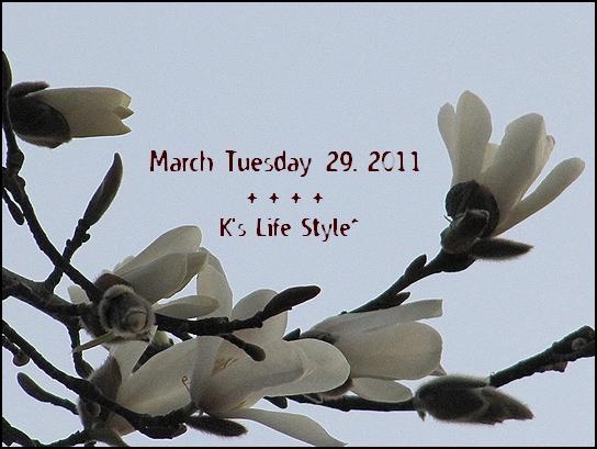 3月29日.jpg