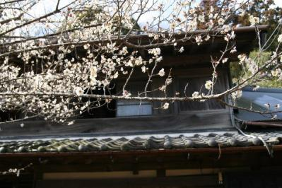 梅と古民家の二階
