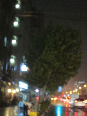 斜めになった街路樹プラタナス