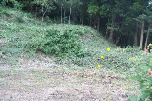 草刈り後の古民家裏山への獣道