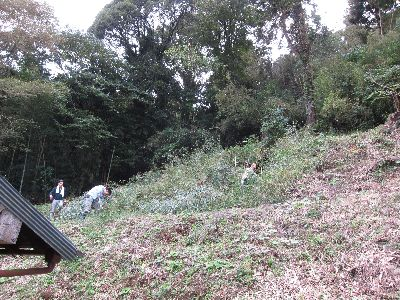 裏山で竹刈り