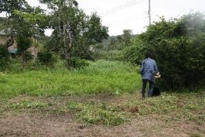 刈り払い機で草刈り