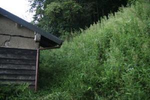 古民家の夏草茂る裏山