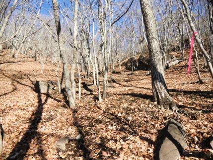 落ち葉でフカフカだけど歩きづらい