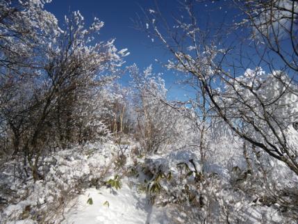 黒檜山頂1
