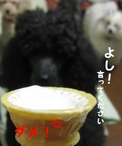 IMG_1089.jpg