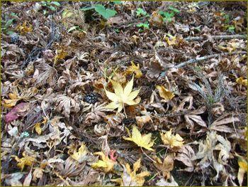 落ち葉も無残な茶色です。