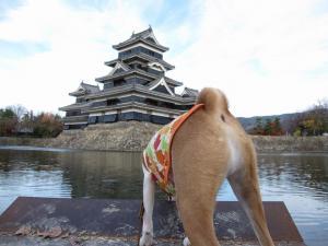 拙者と松本城