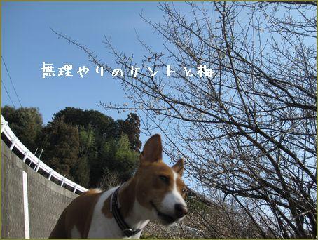 kentoと梅のイメージです。