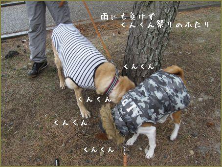 犬は喜び庭駆け回り・・・
