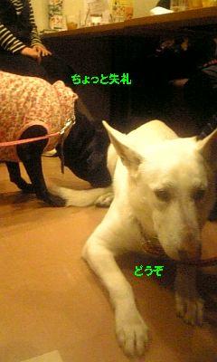 DVC00204 まーずちゃん