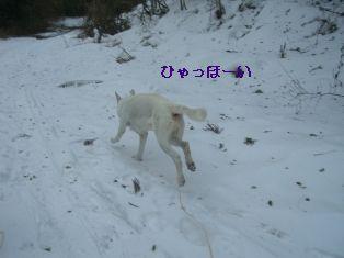CIMG6931ユキ