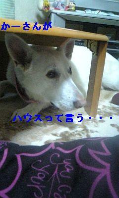 DVC00045_20110108230520.jpg