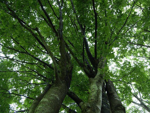 健康の森2