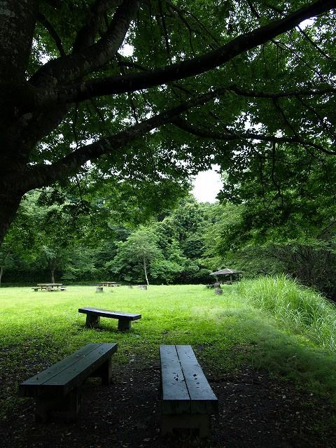 健康の森4