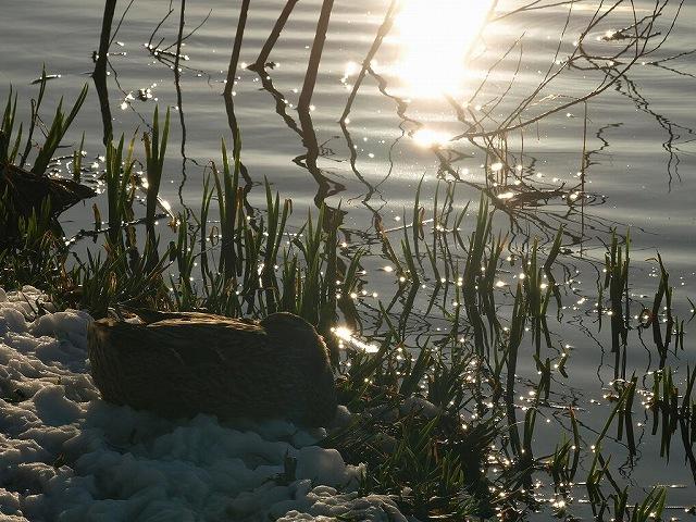 千代田湖13