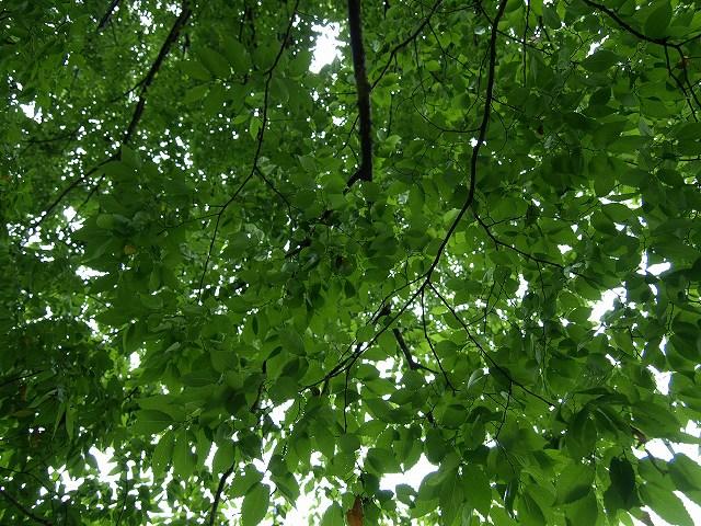 健康の森6