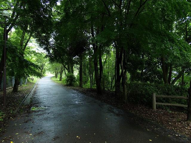 健康の森1