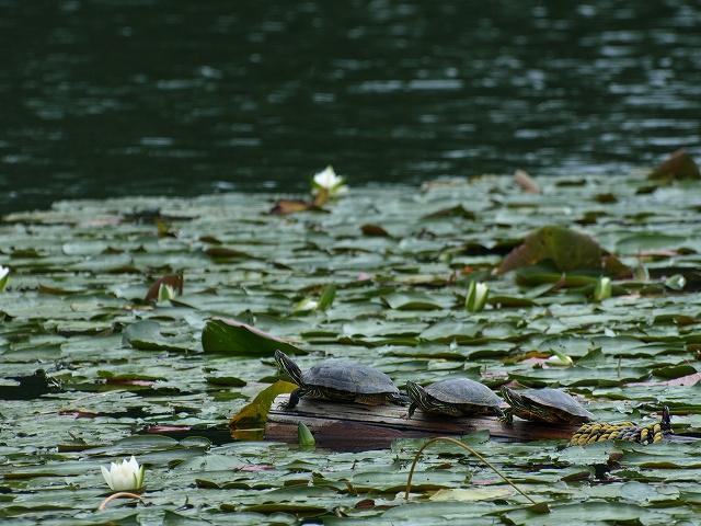 千代田湖5