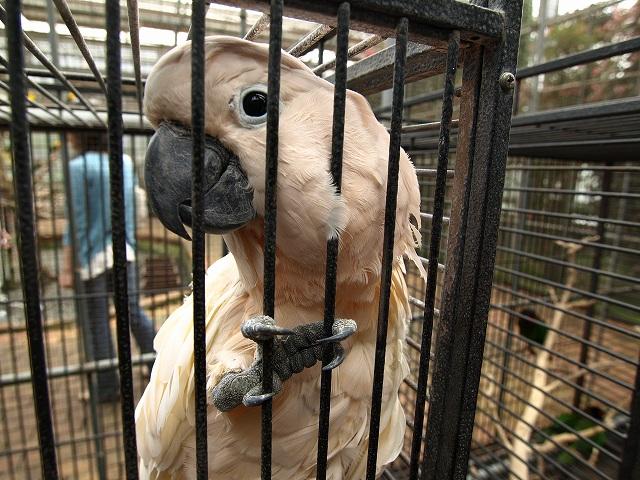 花鳥園鳥7
