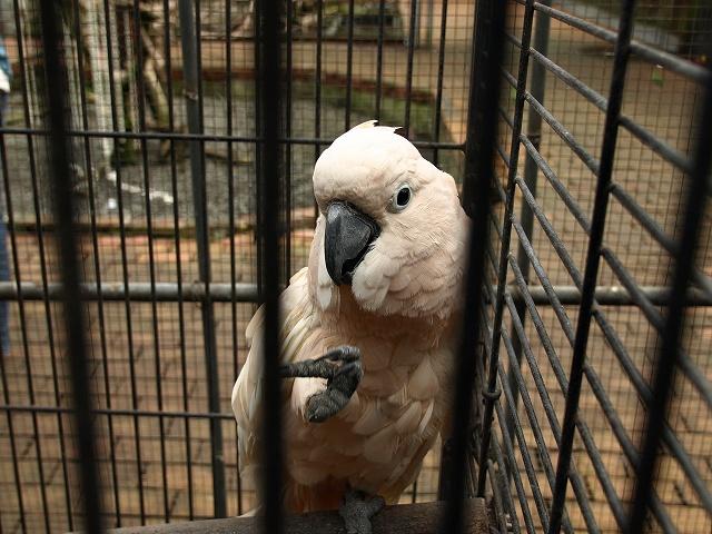 花鳥園鳥8