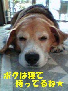 20110625_1.jpg