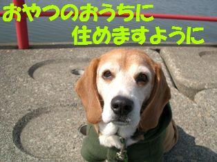20110706_5.jpg