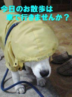20110731_1.jpg