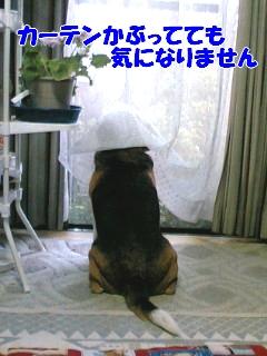 20111027_1.jpg