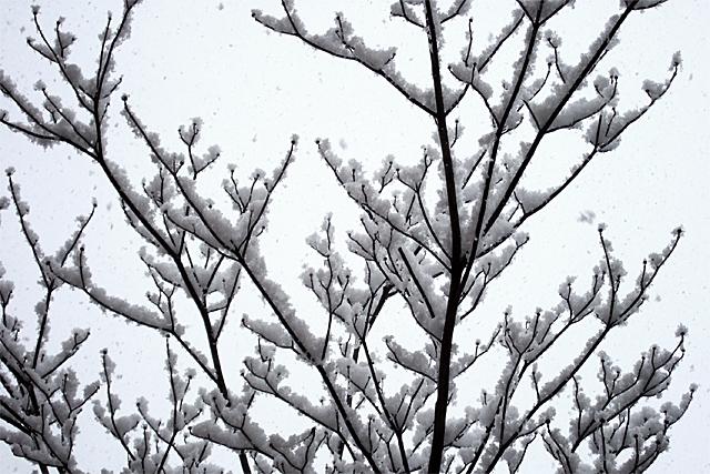 100218_001_東京の雪