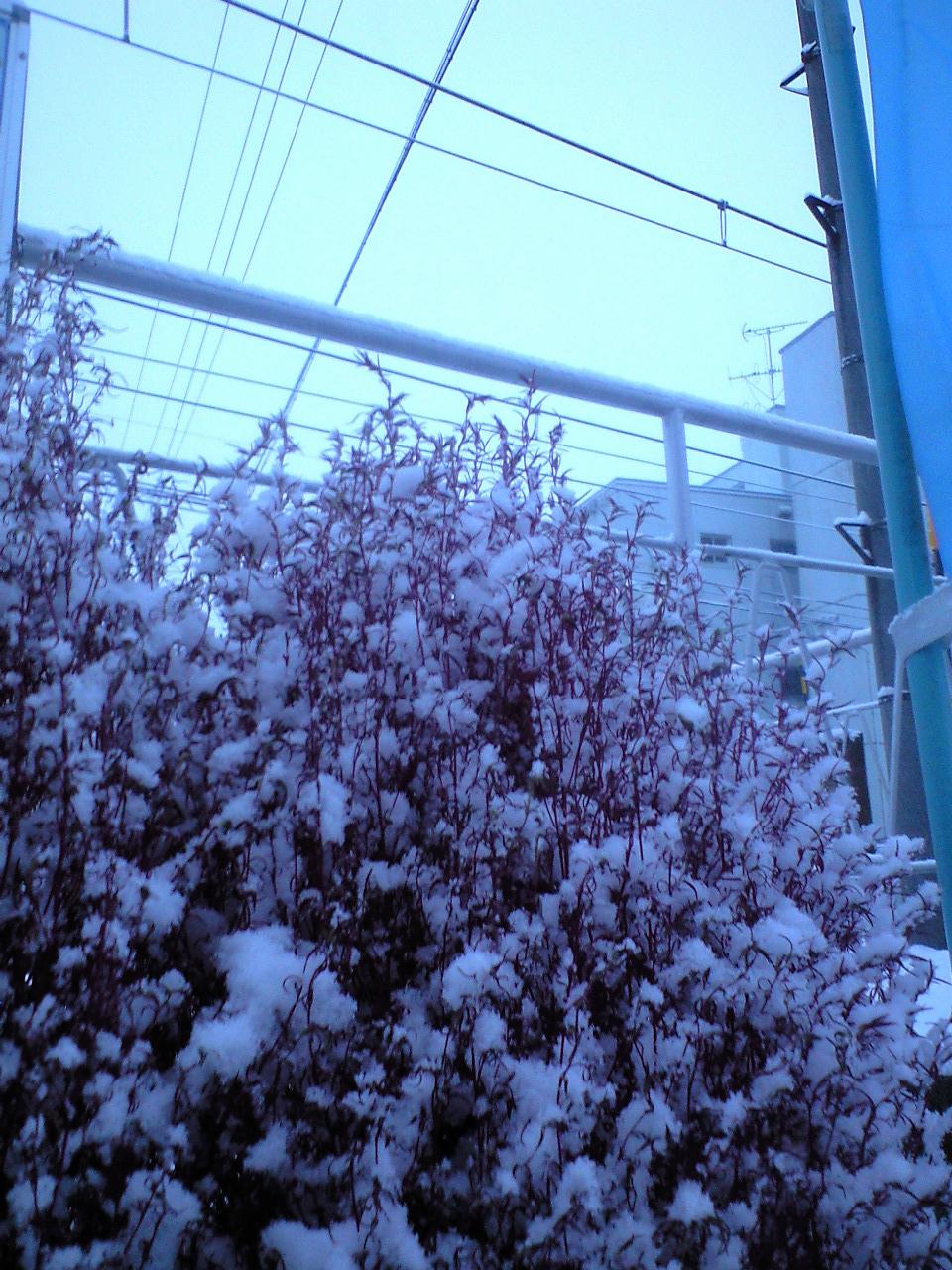 雪の桐原朝 (7)