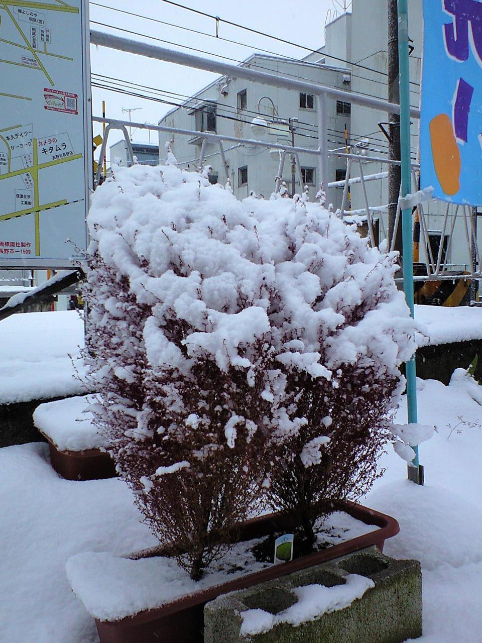 雪降りの朝 (6)