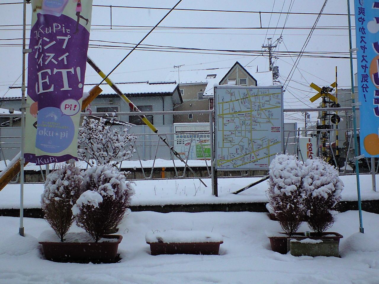 雪降りの朝 (5)