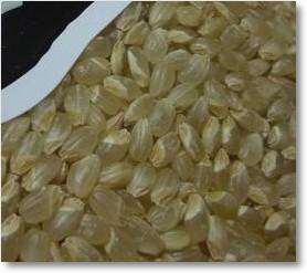 玄米カミアカリ2