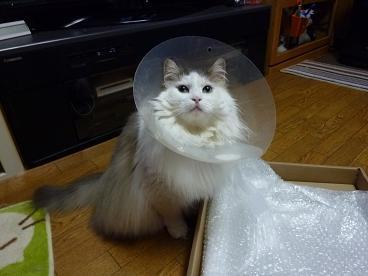 ファーミネーター猫用20100805-4