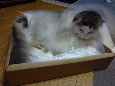 時計の空箱in猫たち20100805-3