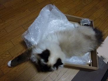 時計の空箱in猫たち20100805-1