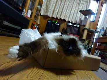 時計の空箱in猫たち20100805-2