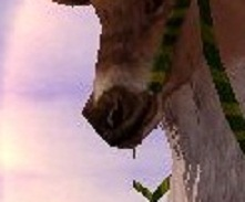 ルドルフ鼻
