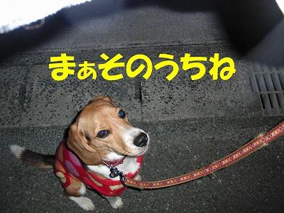 CIMG4681_sh01.jpg