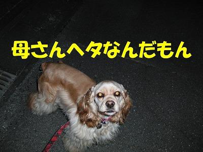 CIMG4682_sh01.jpg
