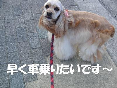 CIMG5046_sh01.jpg