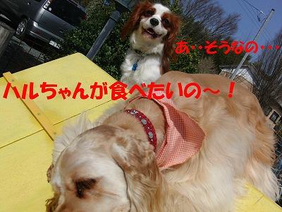 CIMG5152_sh01.jpg