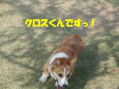 CIMG7156_sh01.jpg