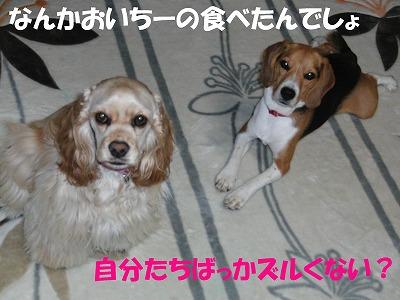 CIMG7376_sh01.jpg