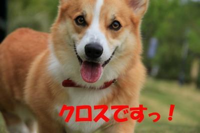 IMG_8954_sh01.jpg