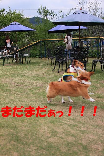 IMG_8981_sh01.jpg