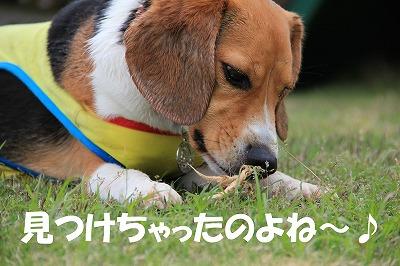 IMG_8990_sh01.jpg