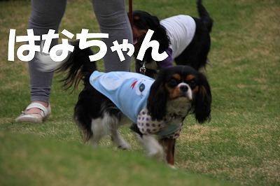 IMG_9157_sh01.jpg