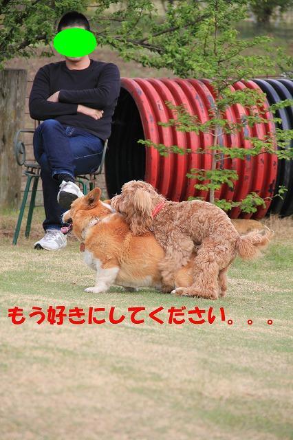 IMG_9190_sh02.jpg